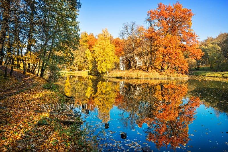 москва, царицыно, осень, пейзаж Два дубаphoto preview
