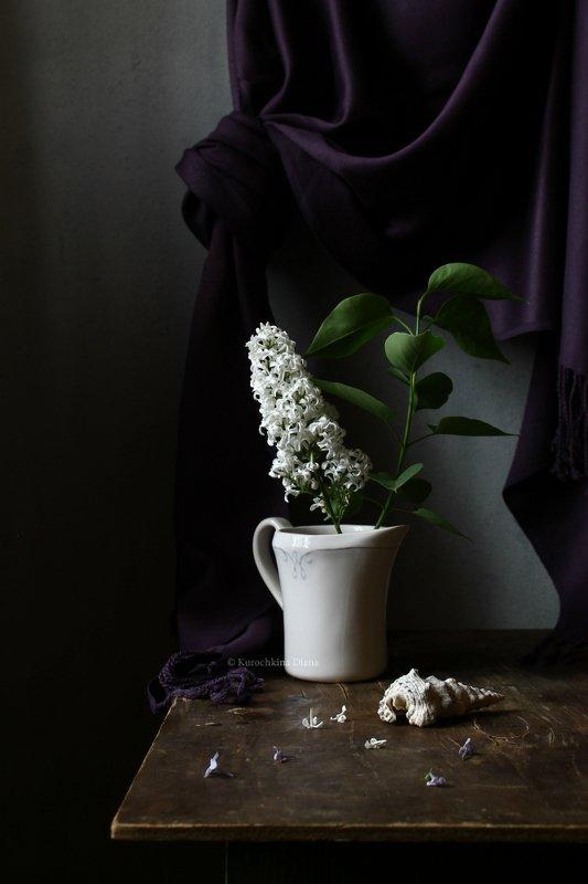 натюрморт, сирень, белая сирень Ветка белой сирениphoto preview