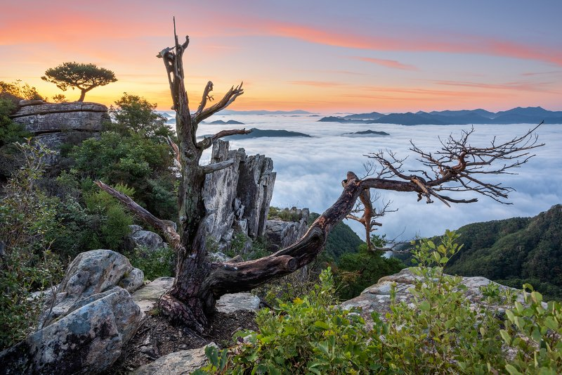 mountains,peak,hiking,fog,clouds Rotten treephoto preview