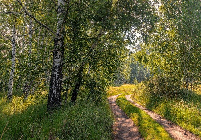 landscape, пейзаж, утро, лес,  деревья, солнечный свет,  солнце, природа, солнечные лучи,  прогулка, луг, дорога хорошее утроphoto preview