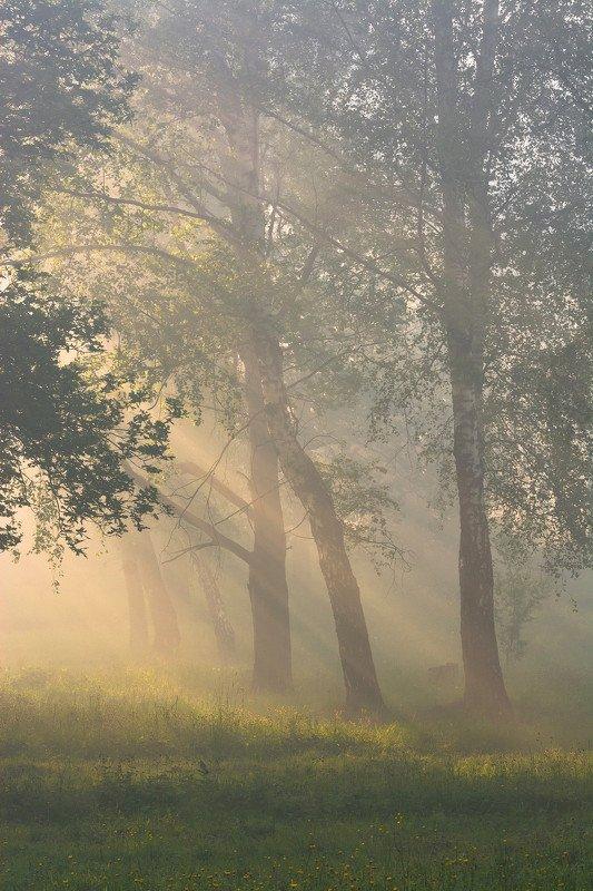 природа рассвет утро По утруphoto preview