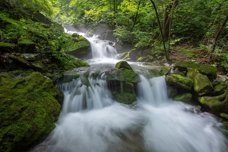 forest, summer, place, korea, trees, waterfalls, moss, light Green stairs waterfallsphoto preview