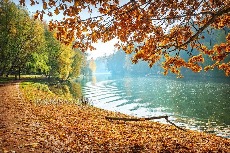 москва, царицыно, осень, пейзаж Дубовая веткаphoto preview