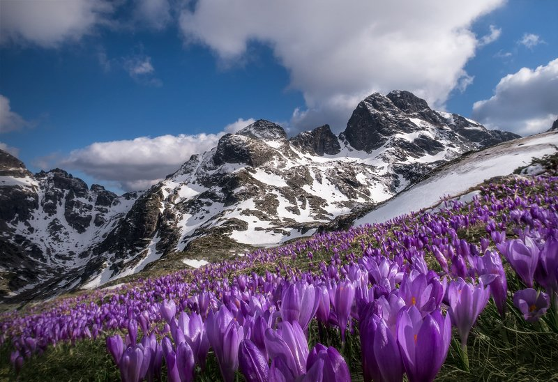 landscape nature scenery spring peak snow crocus clouds mountain пейзаж природа зима весна горы вершина May in Rila mountainphoto preview
