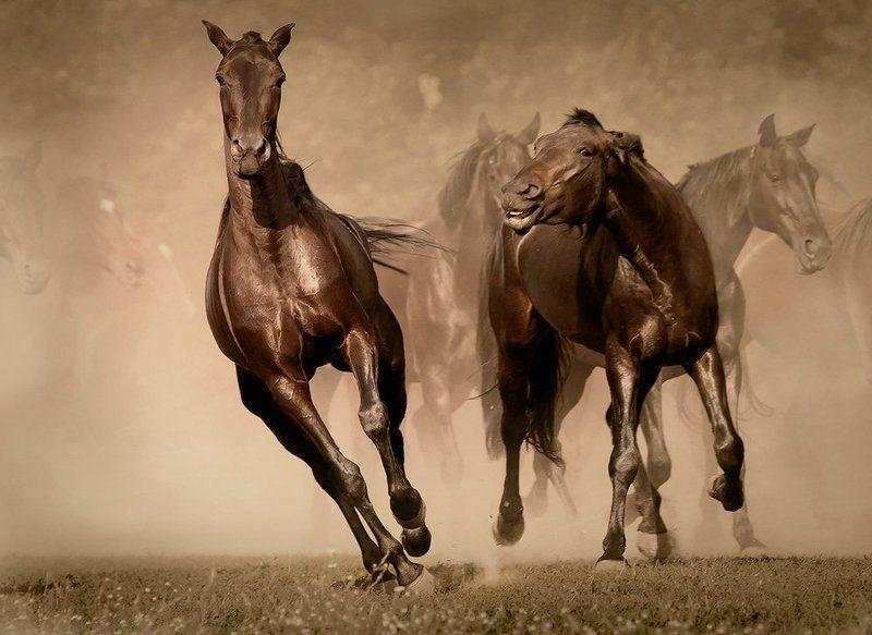кони,лошади,табун,пыль Кони-звериphoto preview