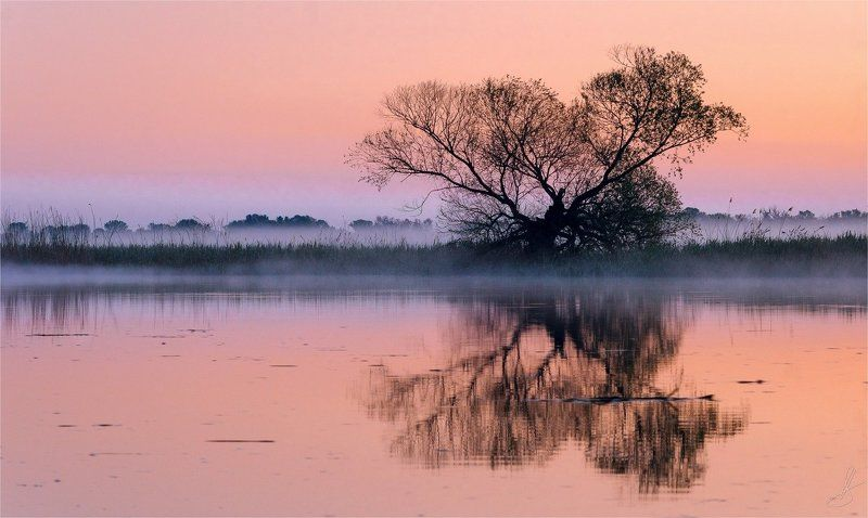 ветки, вода, пейзаж, природа, рассвет, течение, тишина, туман, утро, Нежный Рассветphoto preview