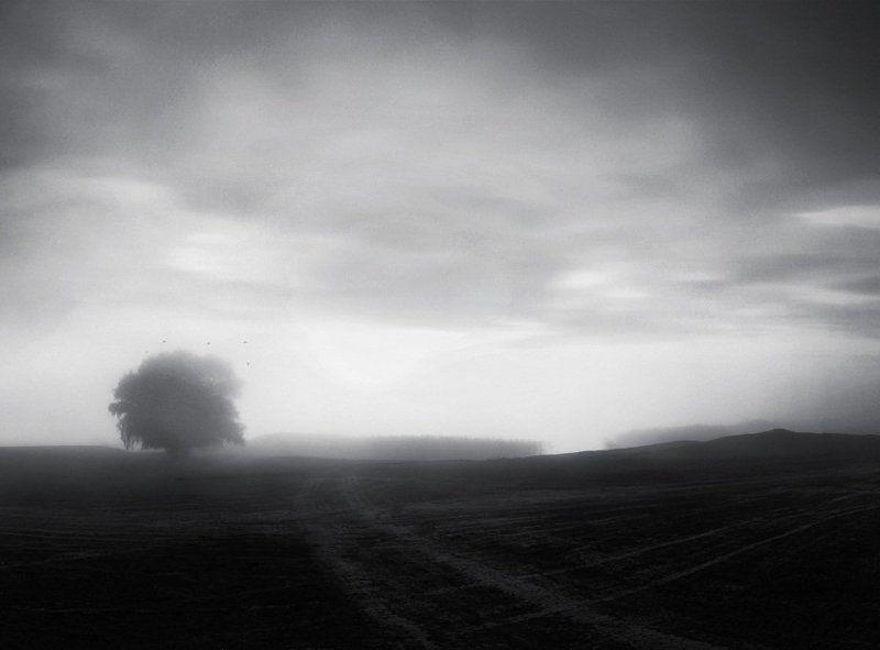 поле , дерево , туман , река , птицы Тишь...photo preview