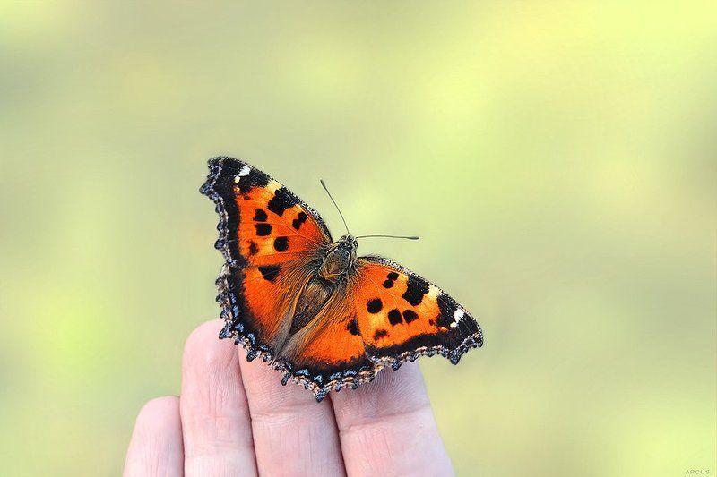 Я и бабочкаphoto preview