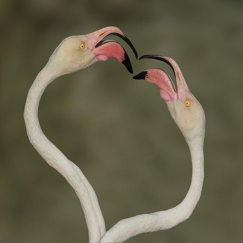 Flamingophoto preview