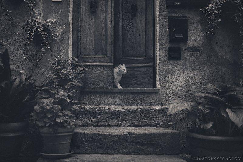 кот, город, крыльцо, фототур, В ожидании гостей | Awaiting guests фото превью