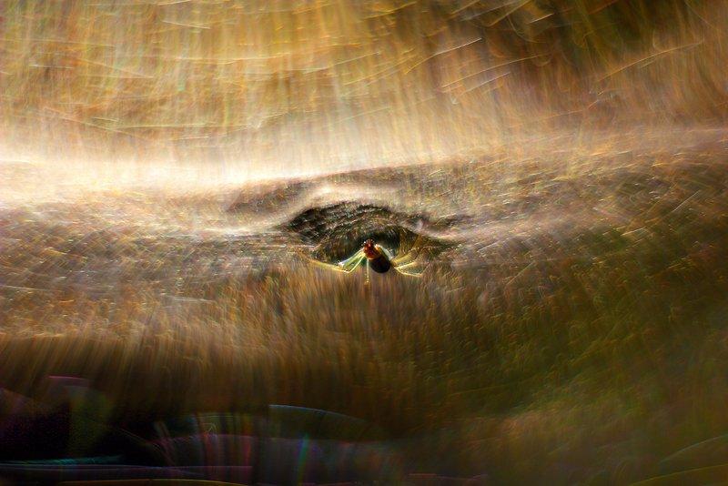 в, паучьем, измерении В паучьем измеренииphoto preview