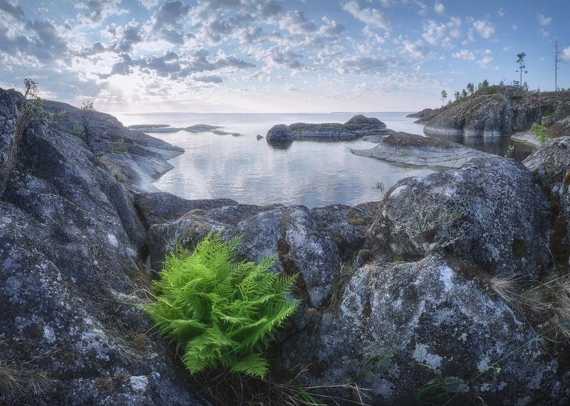 Ладожское озеро, папоротник Ладожский папоротникphoto preview