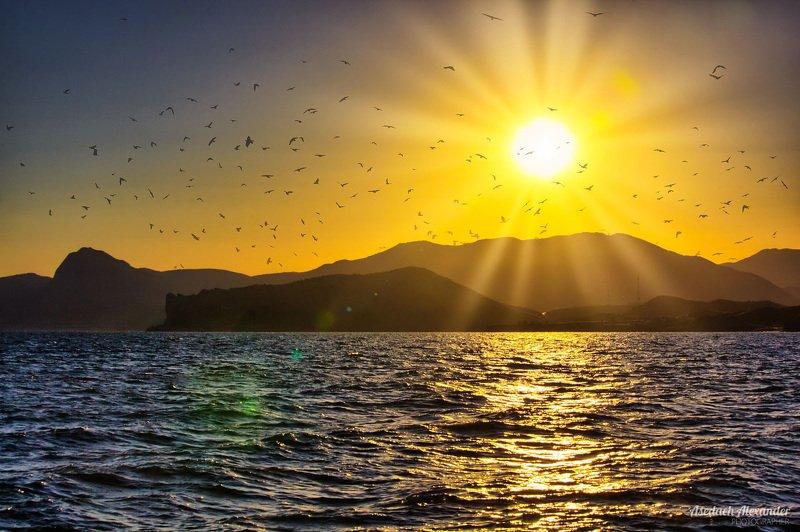 Солнце, море, птицыphoto preview