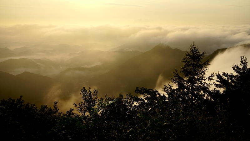 south korea, gangwondo, summer, mountain, nature, morning, rime, fog, forest, mist, clouds, sunlight, Clouds in the mountainphoto preview