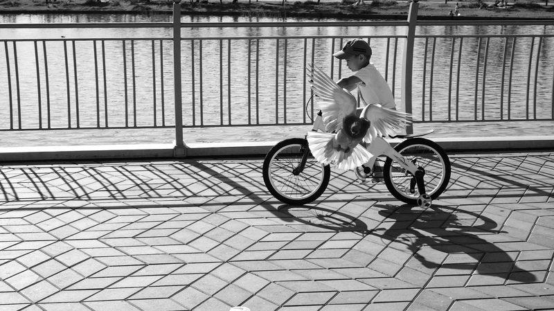 ребёнок, природа, велосипед, голубь photo preview