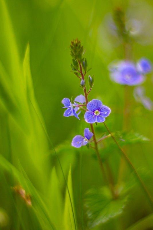 весна, цветы photo preview