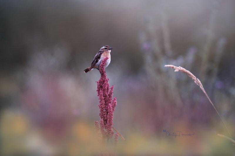 природа, лес, поля, огороды, животные, птицы, макро Ранним летним утром фото превью