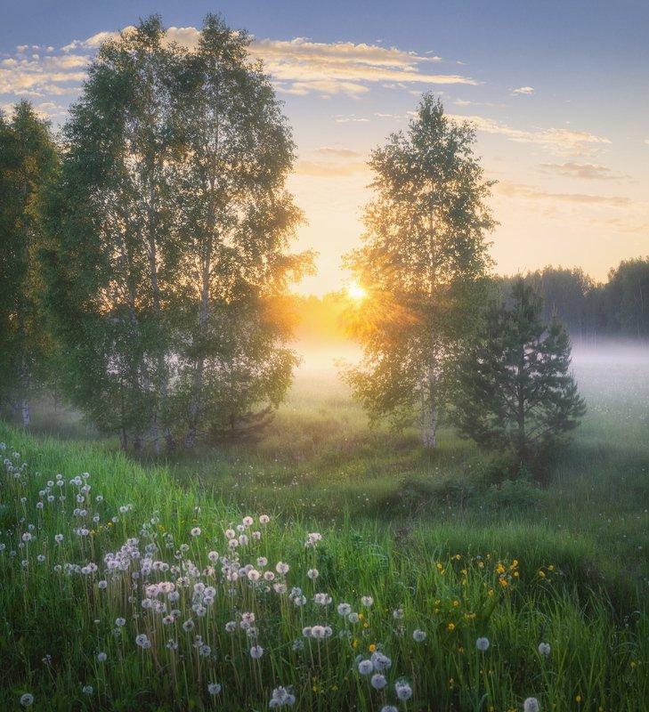 туман, лето, закат После грозыphoto preview