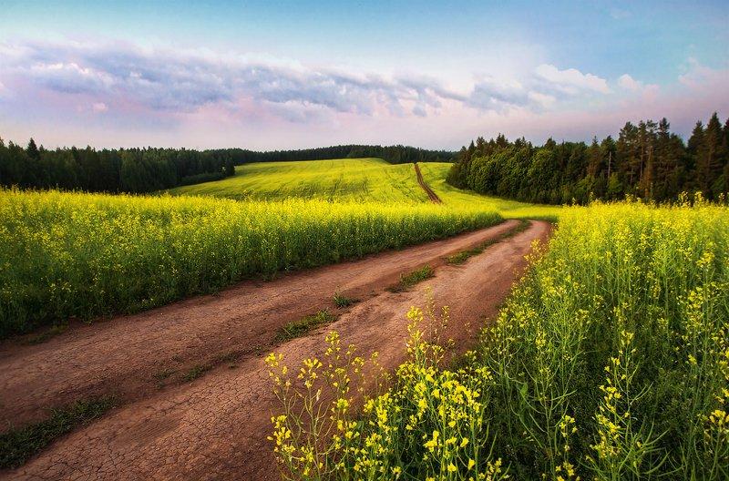 удмуртия, поля, пейзаж, холмы, утро, пейзаж, воткинск, воткинский район, landscape Воткинский районphoto preview