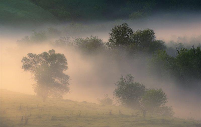 Симфония утра.photo preview