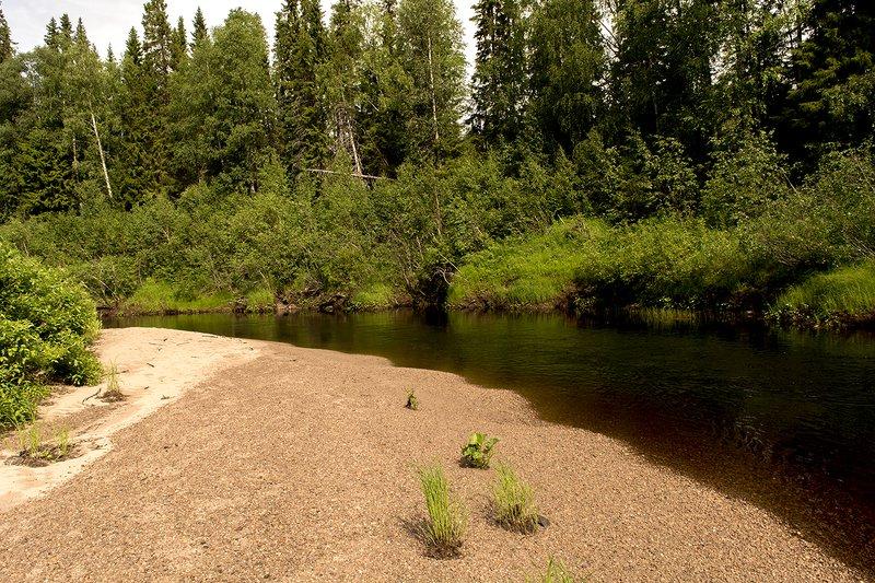 Песчаные отмели реки Сюзьма.photo preview
