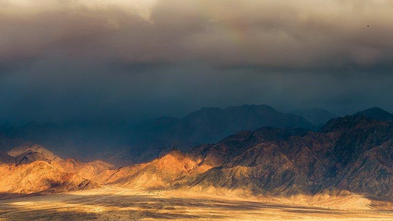 утки,пейзаж,израиль,арава,пустыня,горы Летят уткиphoto preview