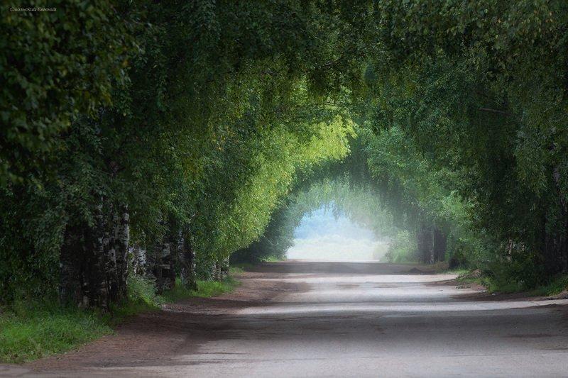 парк, аллея, деревья, дорога, дымка. Древесный туннельphoto preview