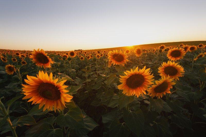 Солнечное полеphoto preview