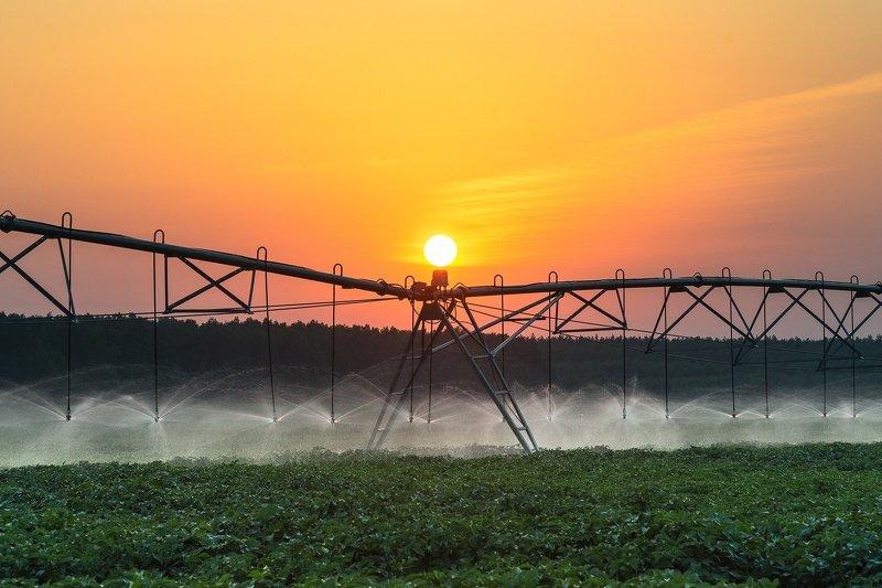 солнце, поле, картофель, автополив Расправляя крыльяphoto preview