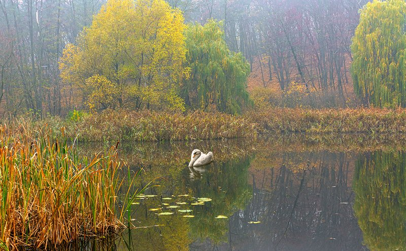 landscape, пейзаж,  лес,  деревья,  прогулка, пруд, озеро, осень, осенние краски, лебедь, птица осенние картинкиphoto preview