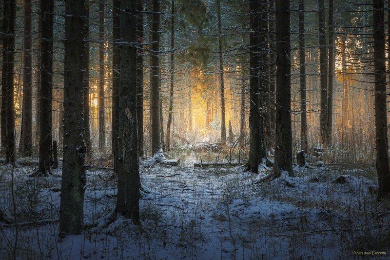 лес, закат, осень, зима, бор, снег, мороз, иней, тропа. Теплый свет в лесной чаще.photo preview