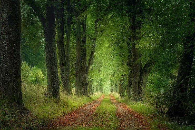 красота лесных дорогa,красота, лес,дорогa,аллея, деревья, листья, осень ,чехия,zanfoar,czech republic,nikon d750,природа красота лесных дорогphoto preview