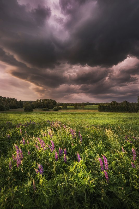 sunset, clouds, green, sunlight, light, village, rural, trees, nature, dramatic, sky, summer, storm, countryside, cottage, architecture, Stormphoto preview