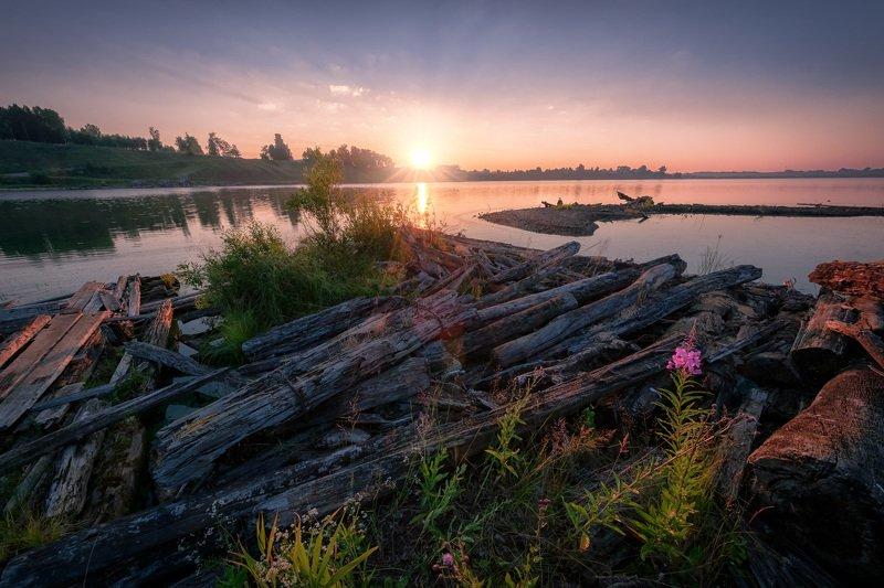 майкор, иньва, река, рассвет, коряги, бревна, цветы, утро, лето Рассвет жаркого дня на Иньве фото превью