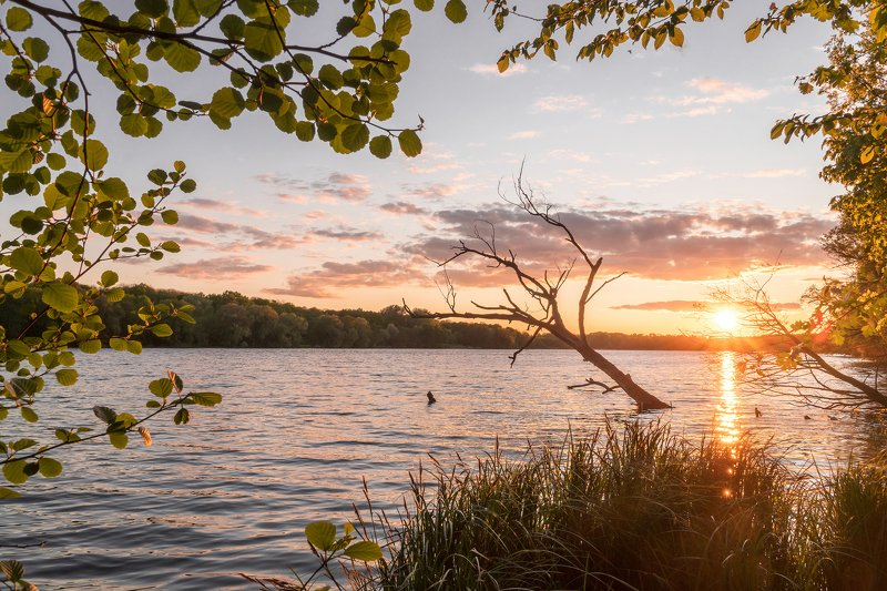 spring, leaves, lake, summer, sun, sunset New lifephoto preview