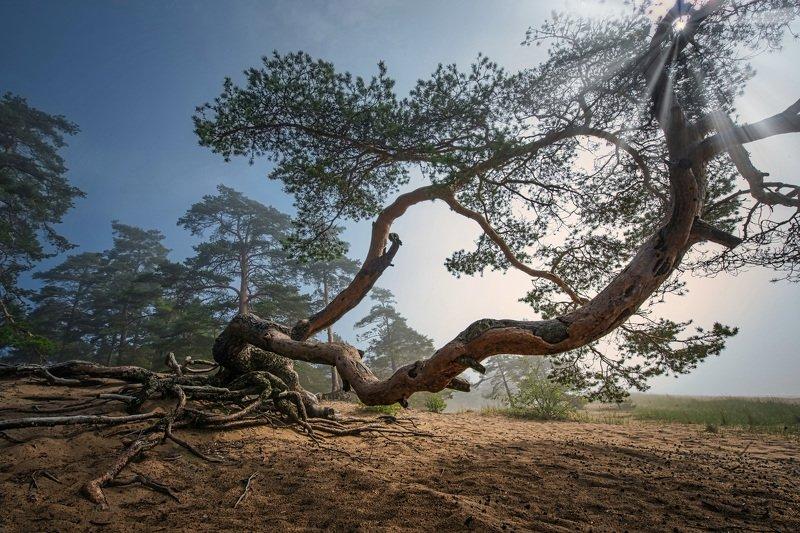 Волшебство природы фото превью