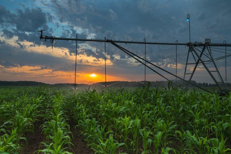 рассвет, солнце, поле, кукуруза, автополив Все для ростаphoto preview