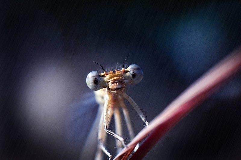 стрекоза, макро, лес, тишина, покой, гармония, гармония мира, природа, macro, dragonfly насекомые, стрекозы, макрофтография, вчувствование \'В лучах софитов\'photo preview