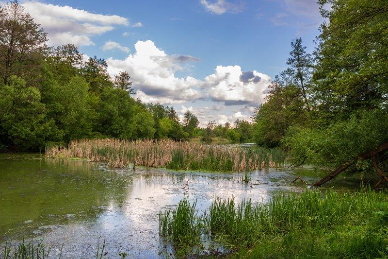 болото, лето, озеро, лес photo preview