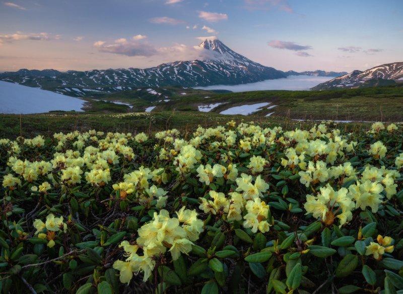 камчатка Вилючинский вулкан. фото превью