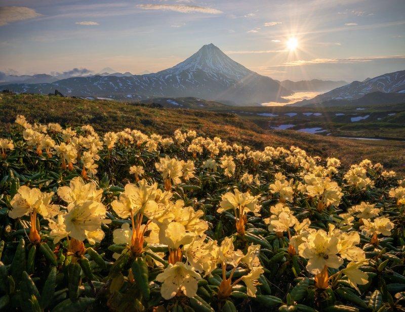 камчатка Цветочное утро. фото превью