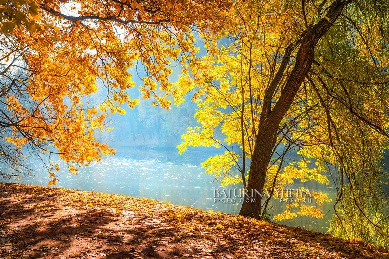 москва, осень, пейзаж, царицыно Солнечные листьяphoto preview