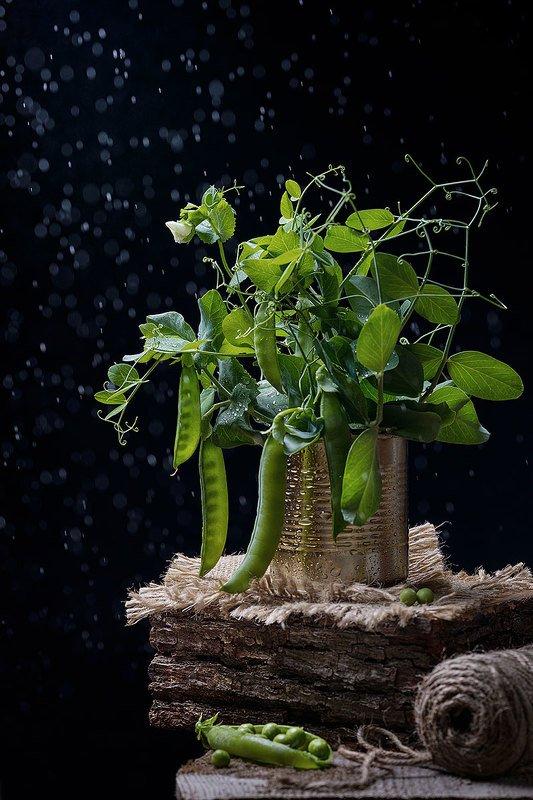 горошк, зеленый, натюрморт, рустик, черный фон, предметная съемка Молодой горошекphoto preview