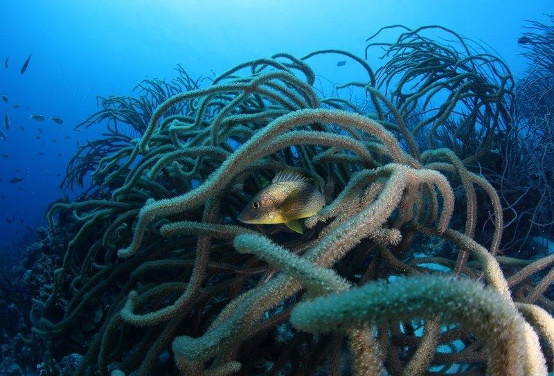 карибы, подводный мир, дайвинг, золото, природа, бонейр Карибское золотоphoto preview