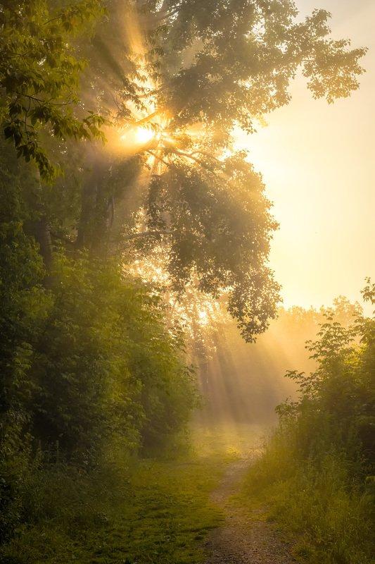 утро, туман, рассвет, солнце, деревья, лучи, тропинка Солнечная тропинка фото превью