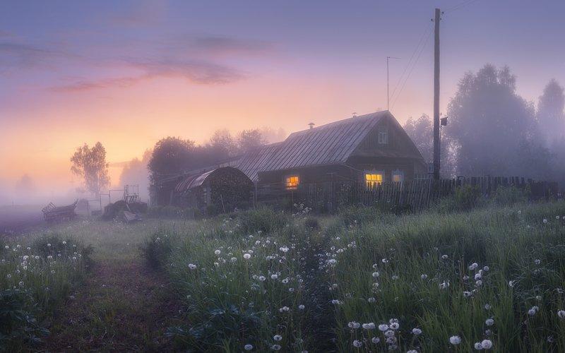 лето, туман, цветы Дрема в одуванчикахphoto preview