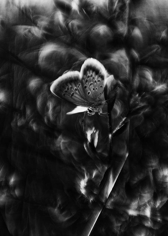 макро, бабочка, ч/б Чёрно-белый сон...или исчезли солнечные дниphoto preview