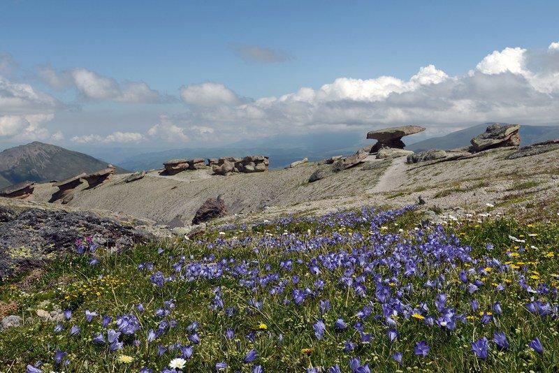 каменные грибы, северное приэльбрусье, кабардино-балкария Поляна \