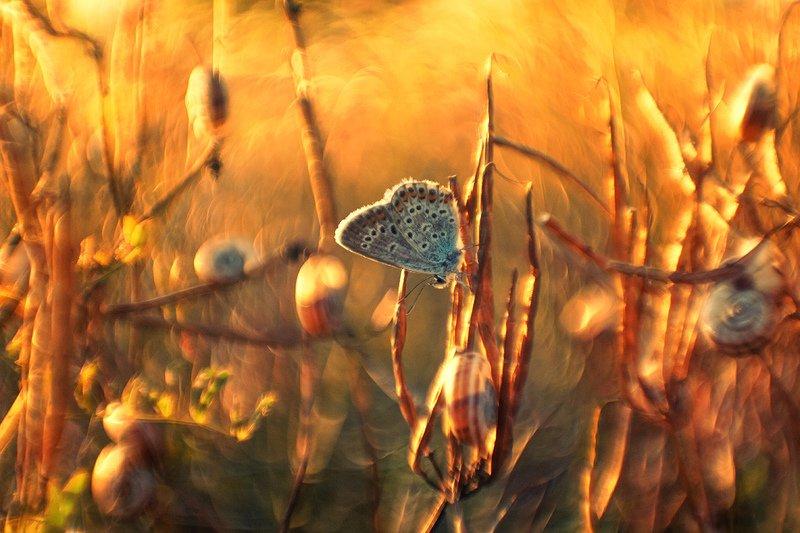 макро, бабочка, вечер, свет Когда зажигаются огниphoto preview