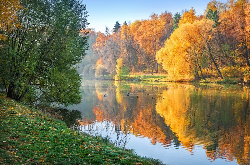 Рыжая осень и уткиphoto preview